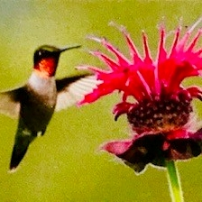 Hummingbird visiting a flower